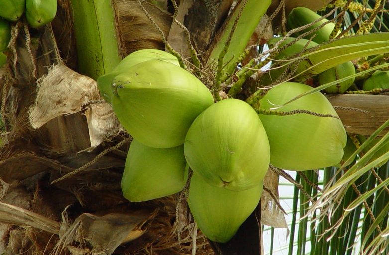 The Health Benefits of Using Coconut Nectar Syrup